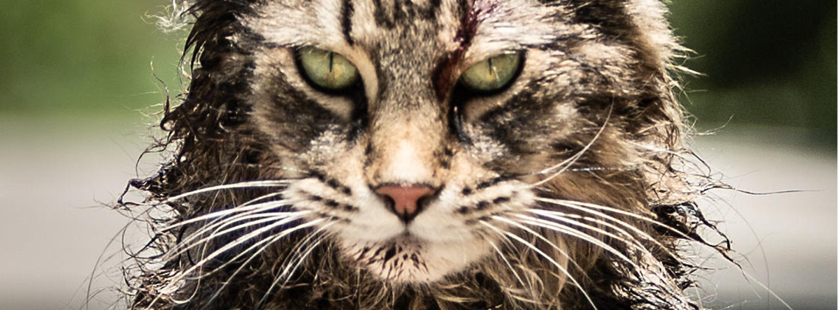 Stephen King's new film The Pet Sematary cop. Paramount