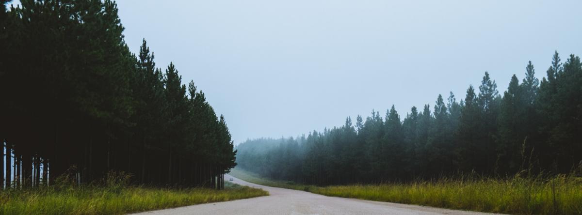 Landevej igennem en skov