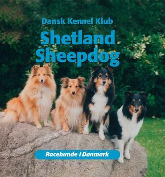 : Shetland sheepdog