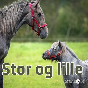 Marianne Randel Søndergaard: Stor og lille