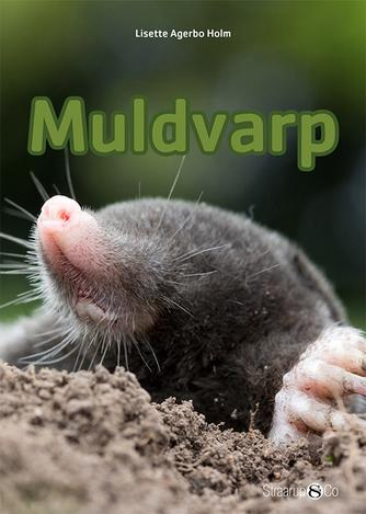 Lisette Agerbo Holm: Muldvarp