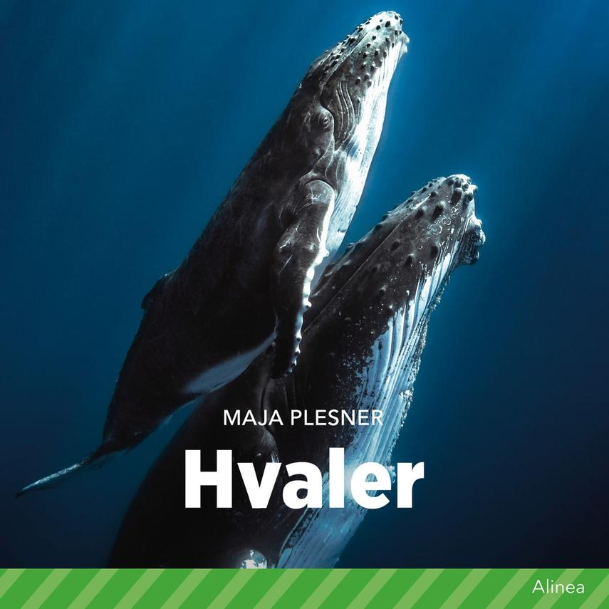 Maja Plesner: Hvaler