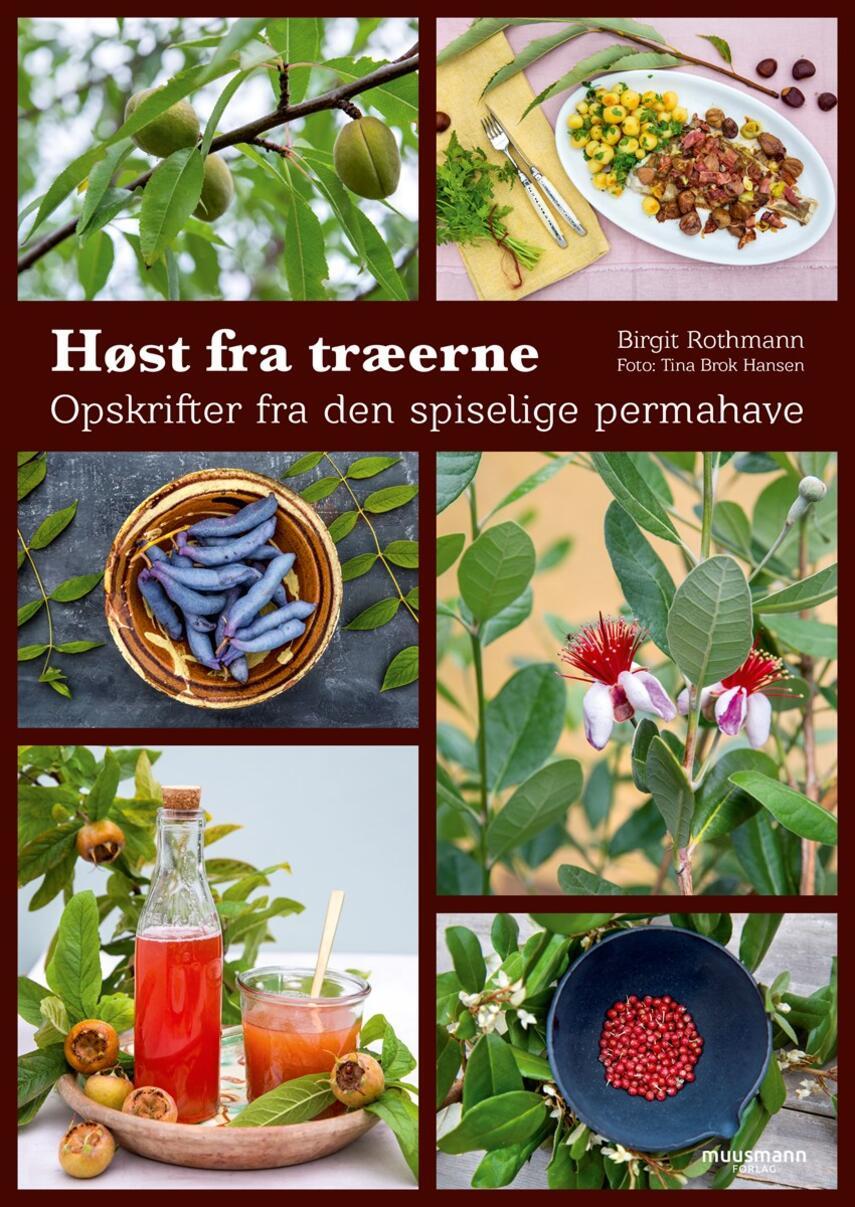 Birgit Rothmann: Høst fra træerne : opskrifter fra den spiselige permahave
