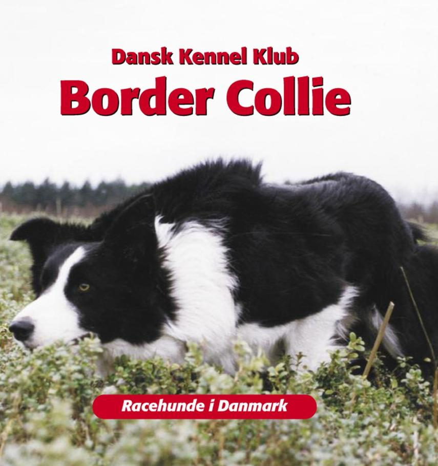 Emmy Simonsen: Border Collie