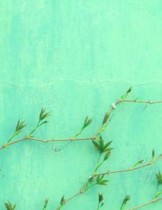 Grøn husvæg med kravleplante
