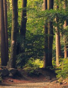 Billede af en skov