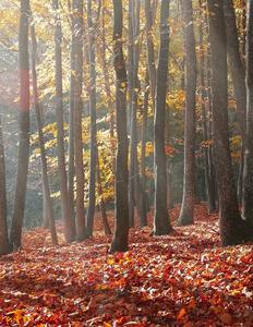 Efterårs skov med løvfald